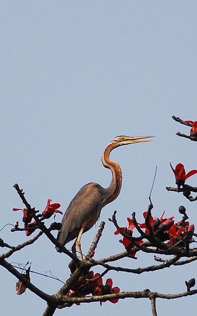 Kaziranga National Park Bird