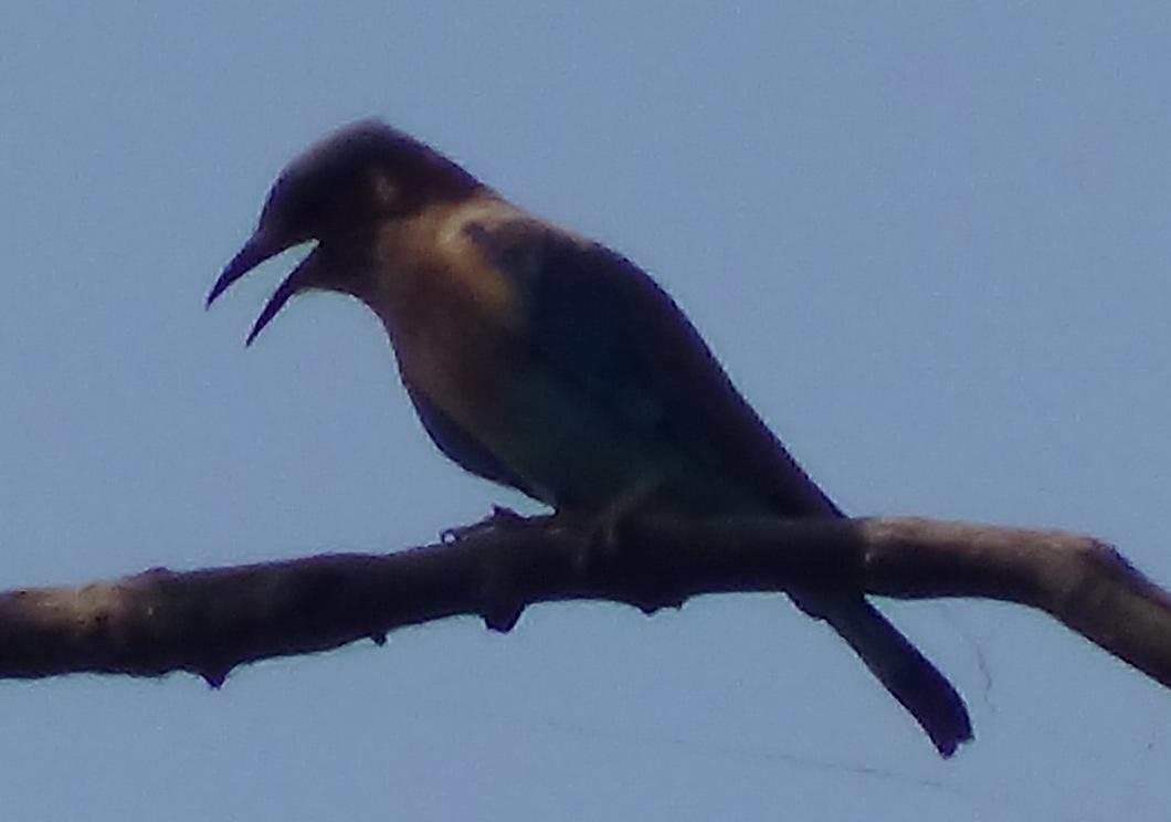 Keoladeo National Park Bird