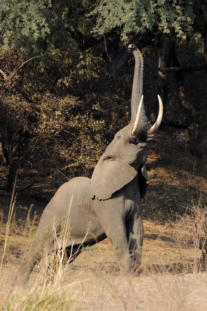 Mana Pools National Park, Sapi and Chewore Safari Areas