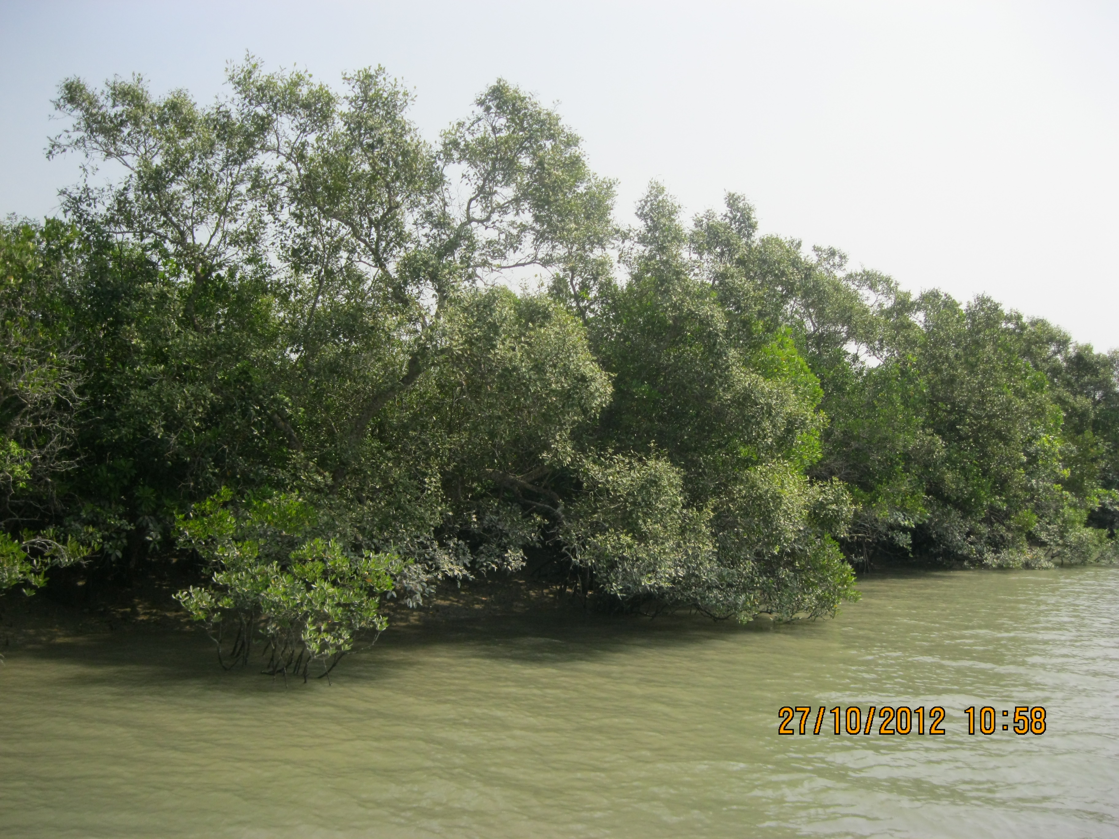 Sunderbans National Park1