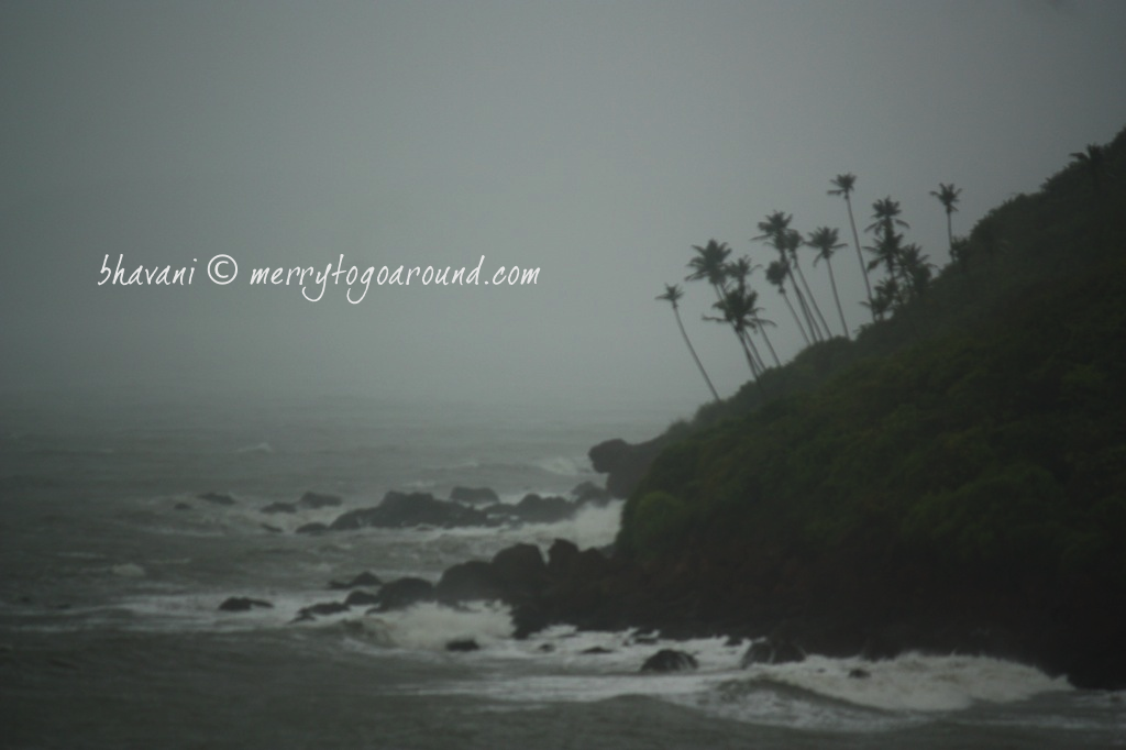 the bending coconut trees at goa