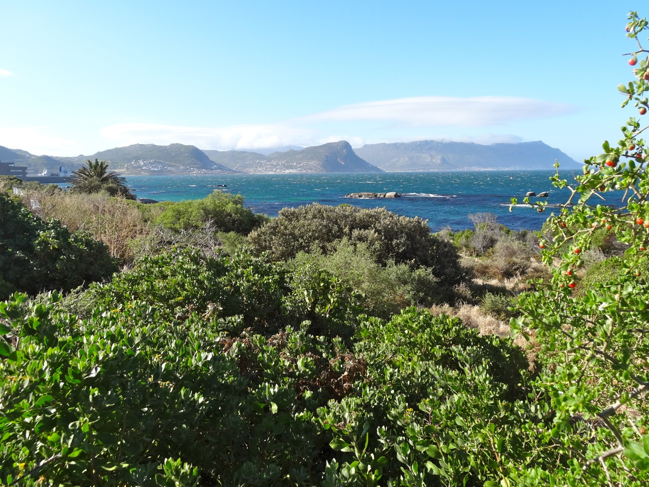 Landscape of the Cape Peninsula
