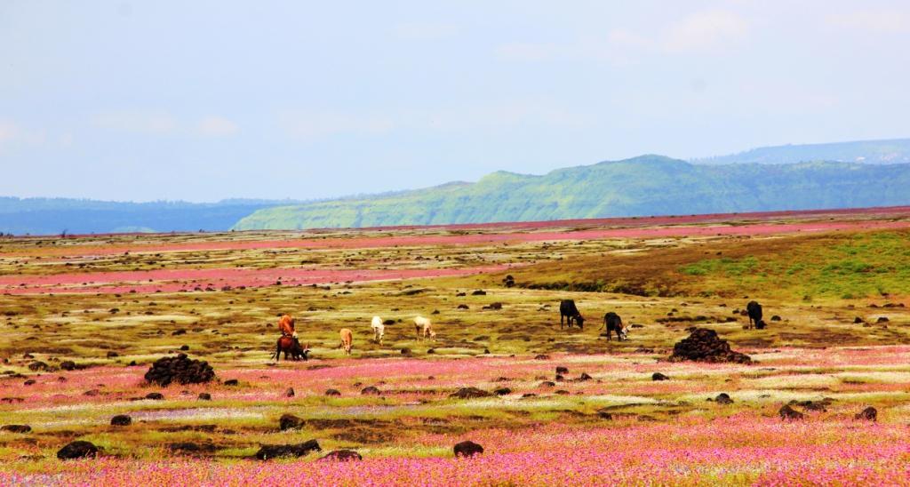 Kaas Landscape