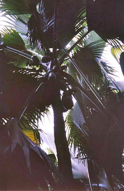 Vallée de Mai Cultural Landscape