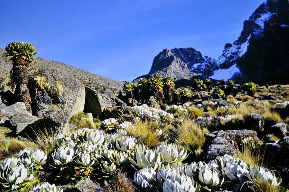 rare glimpse of sun - Mount Kenya National Park/Natural Forest - Kenya Cathrin Eszbach
