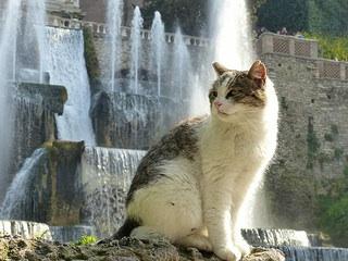 Renaissance Fountains and Gardens Ville d'este