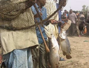 Sanké mon, collective fishing rite of the Sanké