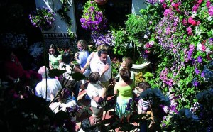 Fiesta of the patios in Cordova