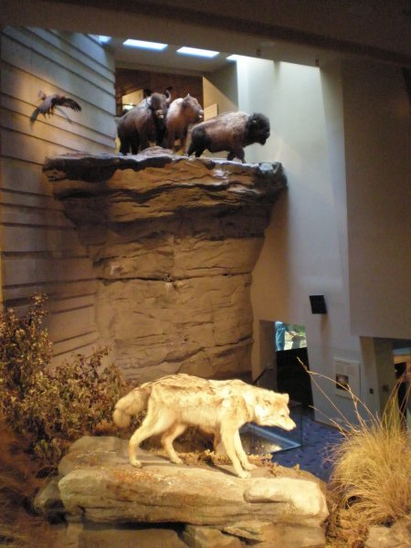 A model outlining what the Buffalo jump looked like about 6000 years ago