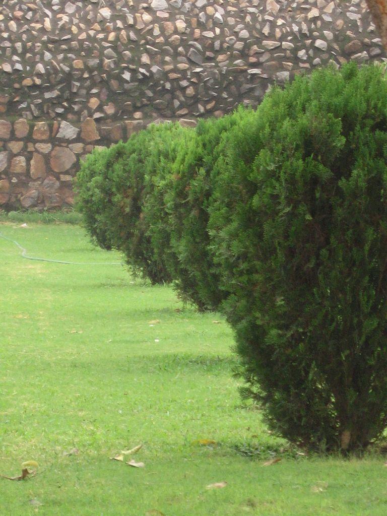 Symmetrical Plants