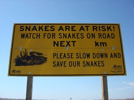 Snakes On Road sm