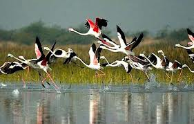 bird sancturary