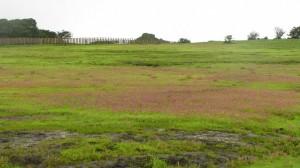 Kaas – Plateau of Flowers, Maharashtra