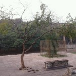 The famous tamarind tree.