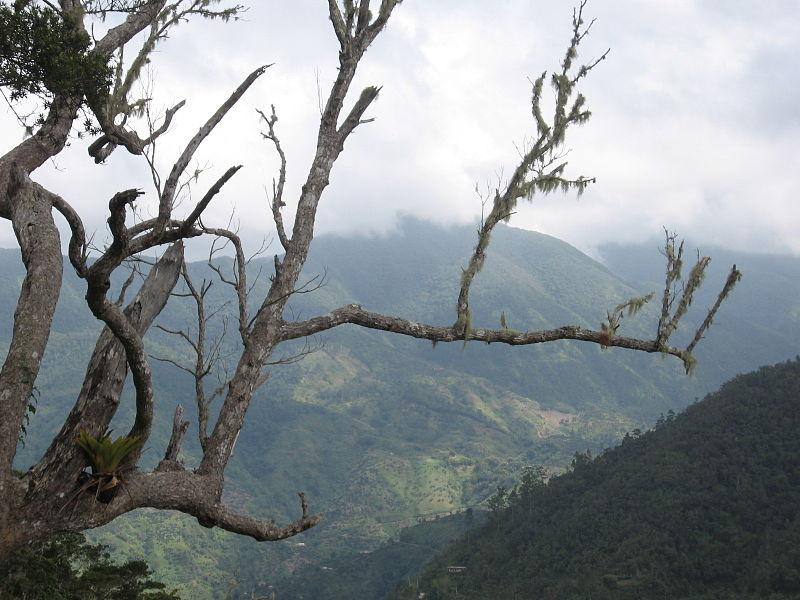 """Blue Mountains, Jamaica"" by Wolmadrian - Own work. Licensed under Public Domain via Wikimedia Commons - https://commons.wikimedia.org/wiki/File:Blue_Mountains,_Jamaica.jpg#/media/File:Blue_Mountains,_Jamaica.jpg"