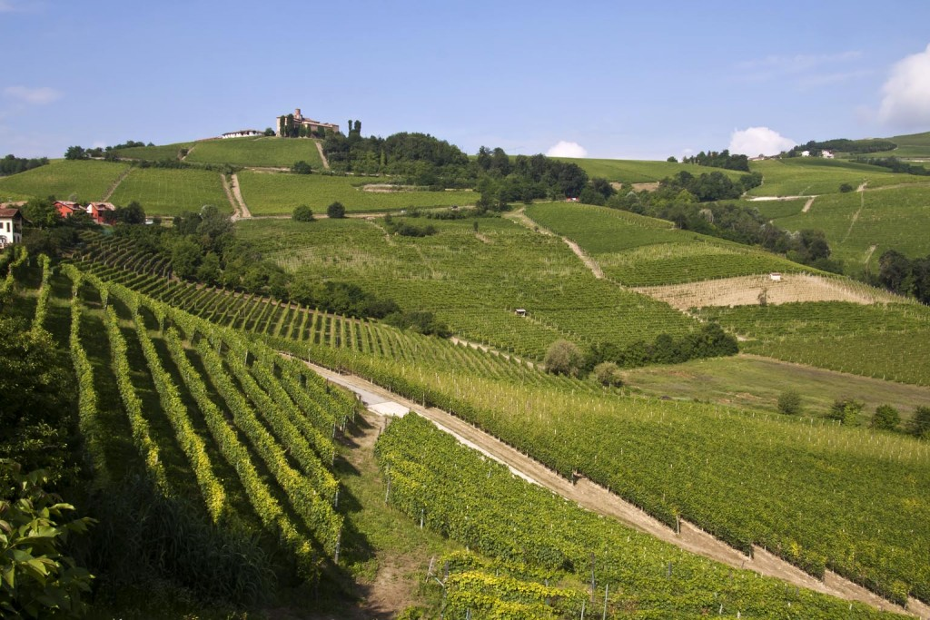 Hilly area and its vineyards (Langhe) in the province of Cuneo in Piedmont – Italy.