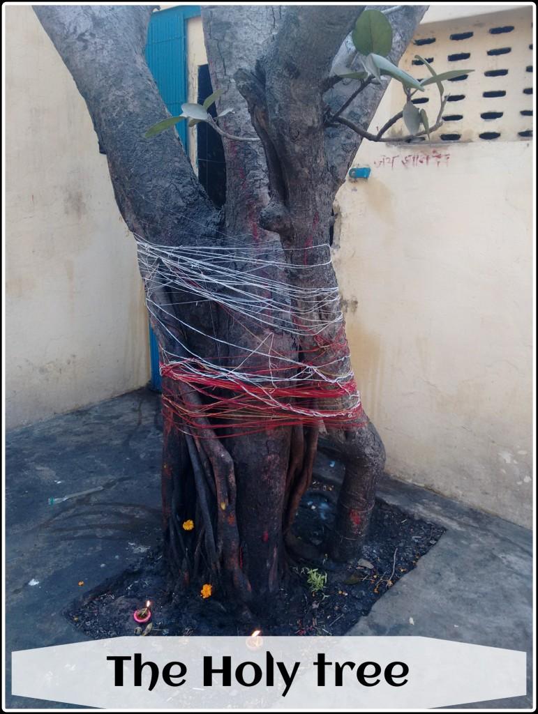 the Holy Tree