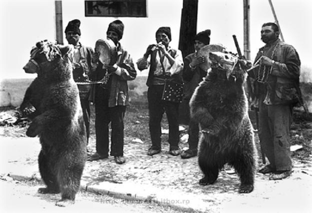 Cu ursul