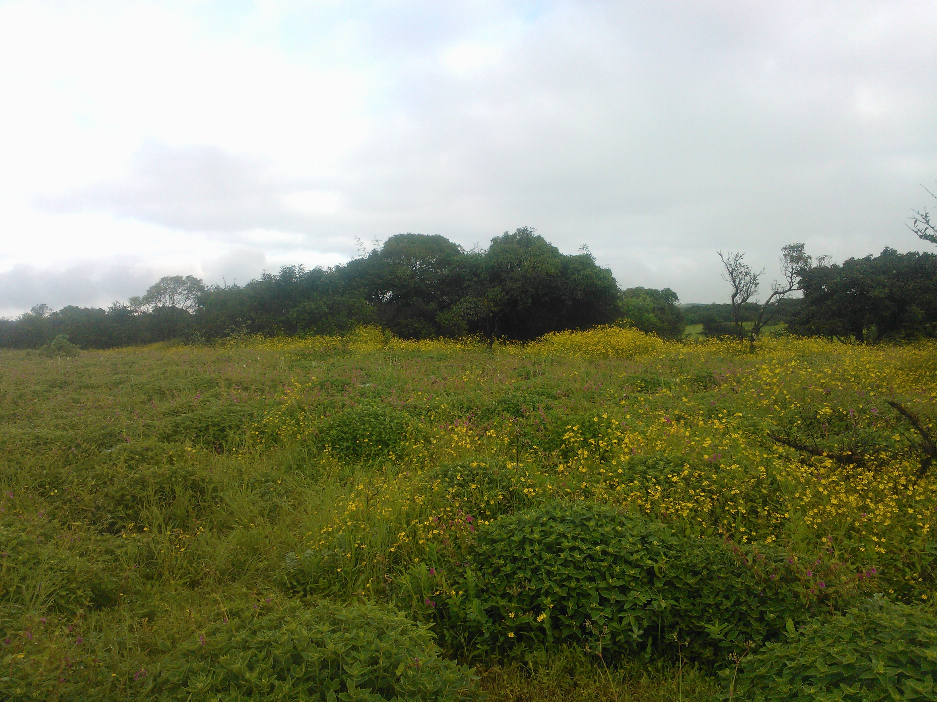 Flowers at the Kaas plateau