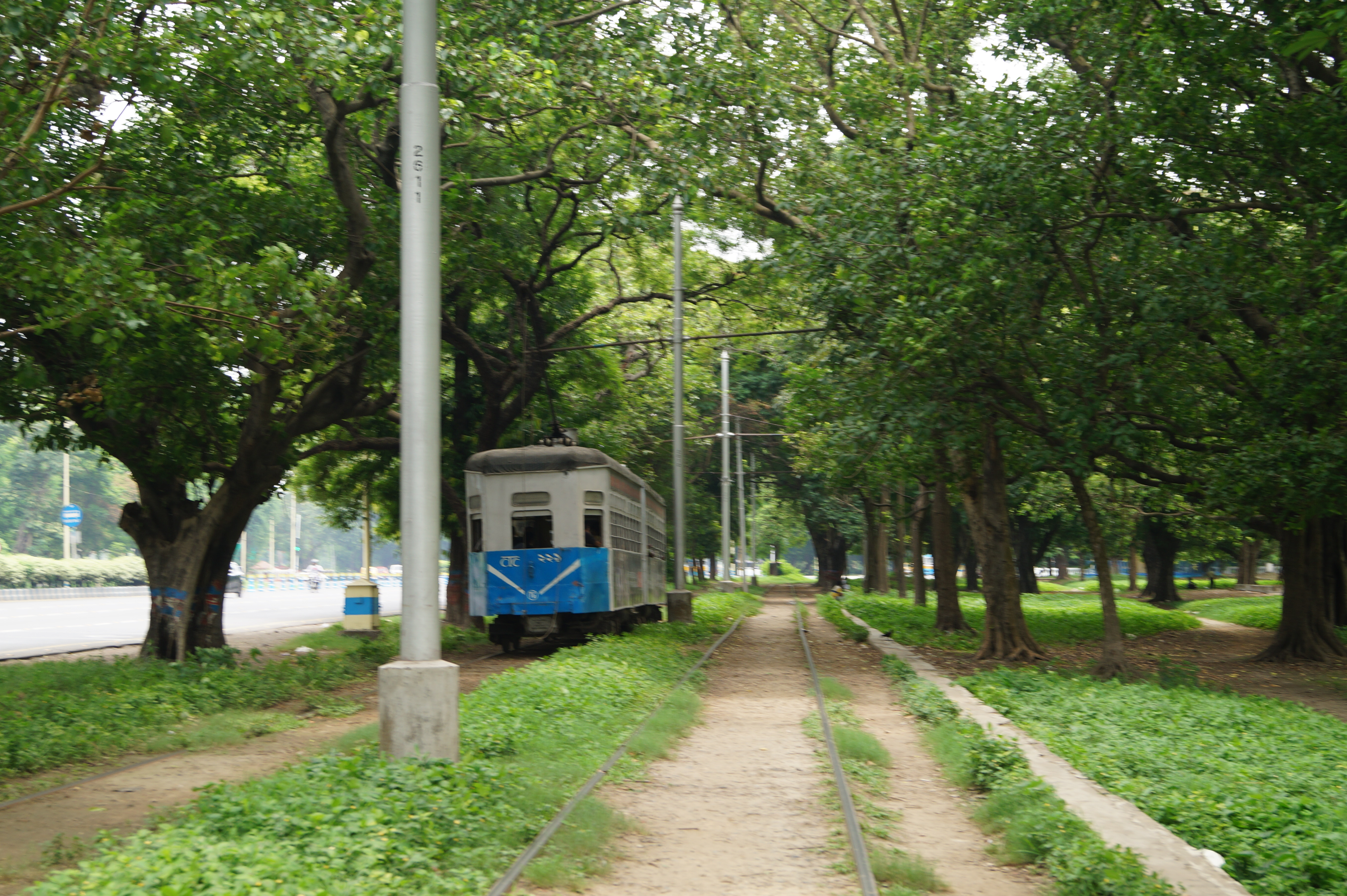 A tram chugs through the Maidan. Photo by Kasturi Basu