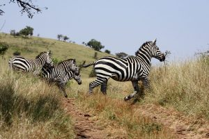 Nechisar: Ethiopia's Biodiversity Hotspot